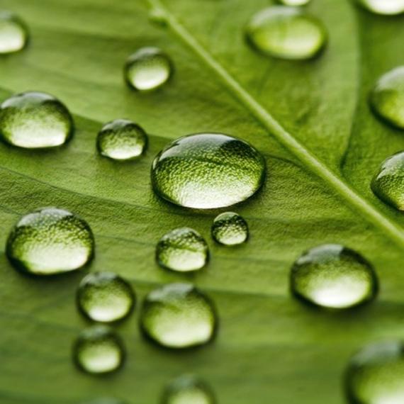 evaporazione_verde