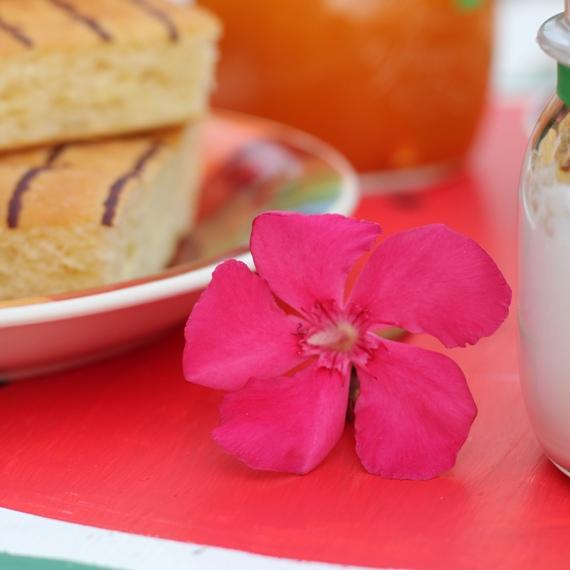 fiore- colazione estiva